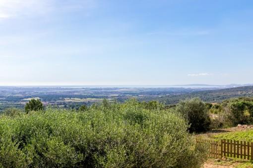 Autemberaubender Blick über die gesamte Bucht von Palma