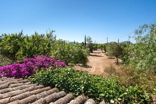 Schöne, renovierte Finca in Algaida