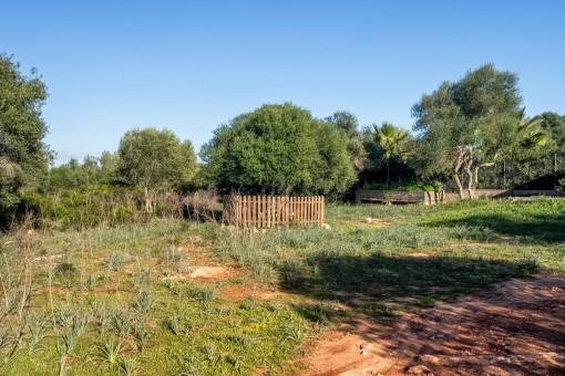 Ein hübscher Garten kann angepflanzt werden