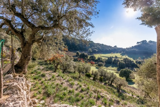 Auf dem ruhigen Grundstück von 100 000 qm befinden sich viele Oliven-und Obstbäume
