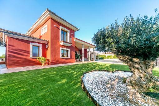 Toller Olivenbaum vor dem Haus