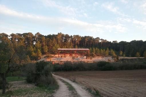 Das Finca-Neubauprojekt ist umgeben von grünen Landflächen