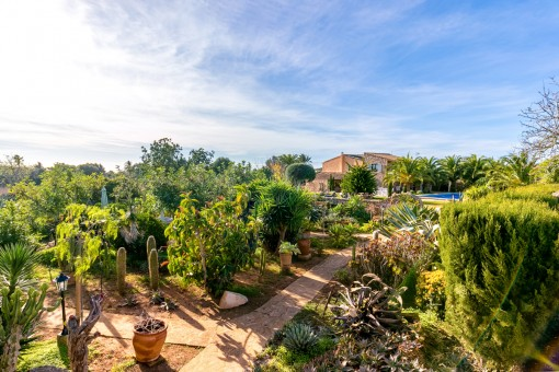 Mediterraner Garten mit vielen Pflanzen
