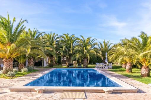 Der idyllische Poolbereich wird von Palmen umgeben