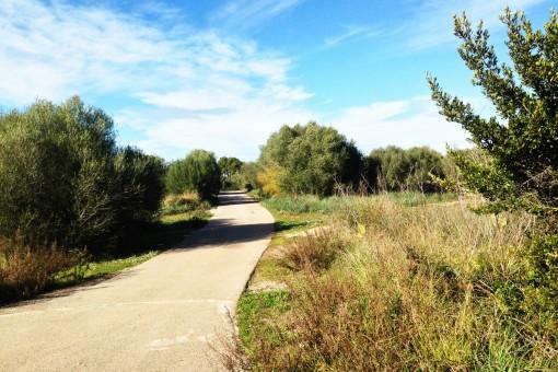 2 zusammenhängende Grundstücke mit Weitblick auf die Tramuntana nur 3 km vom Strand entfernt