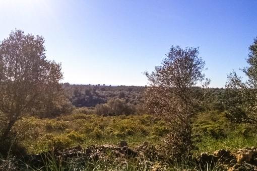 Das Grundstück hat eine Fläche von 500.000 qm