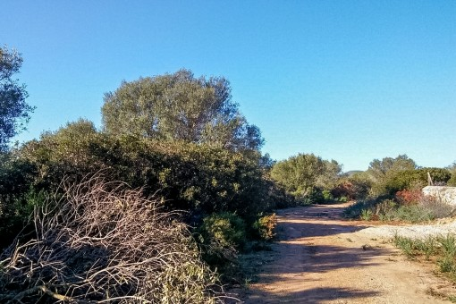 Weg zum Grundstück