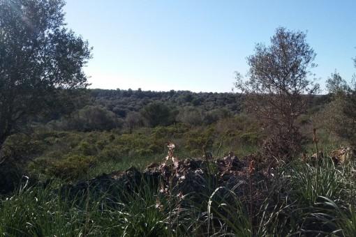 Grundstück in Cala Romantica zum Kauf