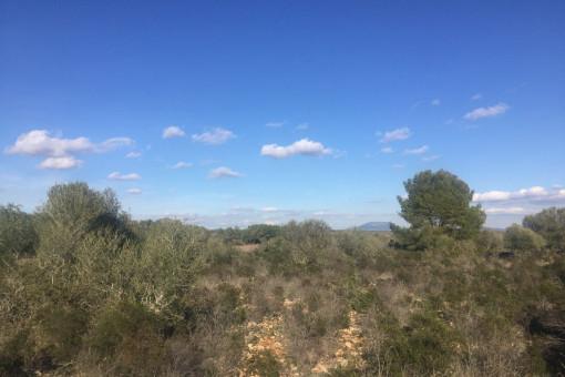 Weiter Blick über die Landschaft
