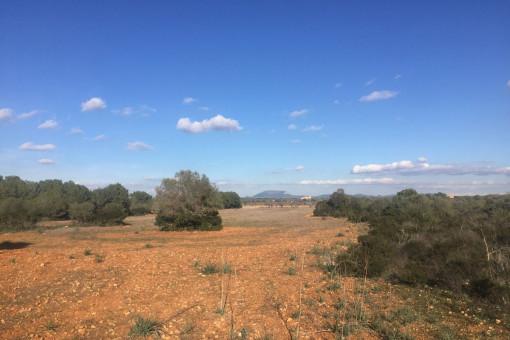 Ruhig gelegenes Fincagrundstück in der Nähe von Cala Pi