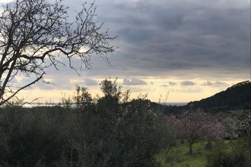 Schönes Grundstück mit Meerblick bei Es Carritxo