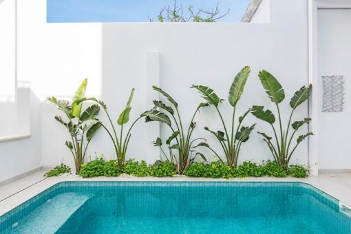 Wundervoller Pool mit grünen Pflanzen