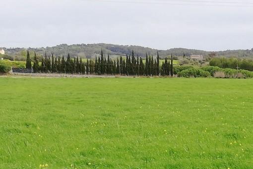 Bebaubares Grundstück in der Nähe von Sineu und Lloret de Vistalegre kaufen