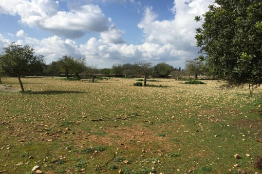 Grundstück mit ca.18.000 qm Fläche mit Konstruktionsplänen für Renovierung in Lloret de Vistalegre