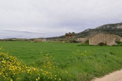 Das Grundstück befindet sich zischen den Dörfern Sineu und Sant Joan