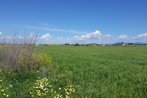 Sehr schönes Grundstück nahe Sa Rapita