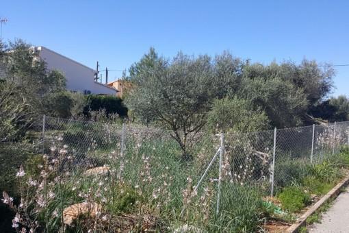 Schönes Grundstück mit Aussicht in Sa Rapita