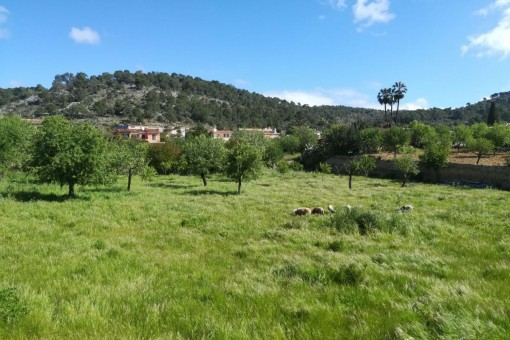 Schönes Grundstück für eine große Villa direkt am Dorfrand von Calvia oder auch für 5 Wohneinheiten