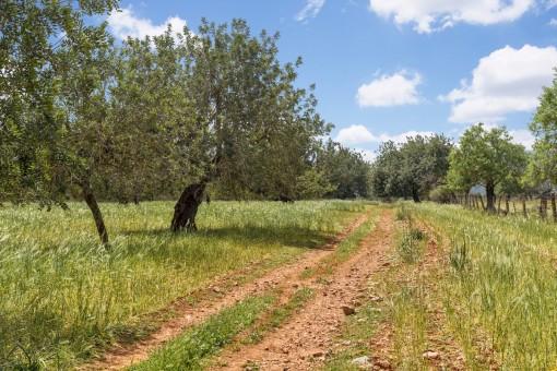Eines der letzten verfügbaren und von der Natur umgebenen Grundstücke mit toller Aussicht in der Nähe von Palma