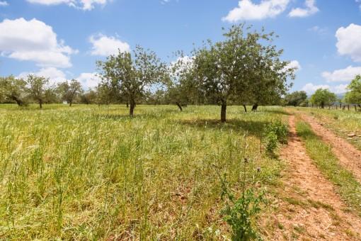 Das Grundstück liegt nahe an Palma