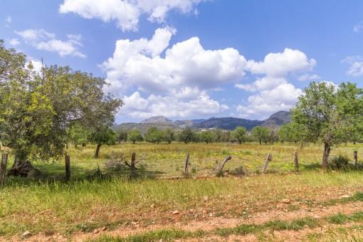 Herrlicher Blick auf das Tramuntanagebirge