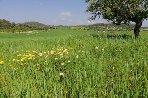 Fantastisches Grundstück mit Hügellage und 360° Rundumblick, ca. 40.000 qm in Montuiri
