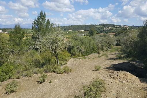 Grüne Umgebung des Anwesens