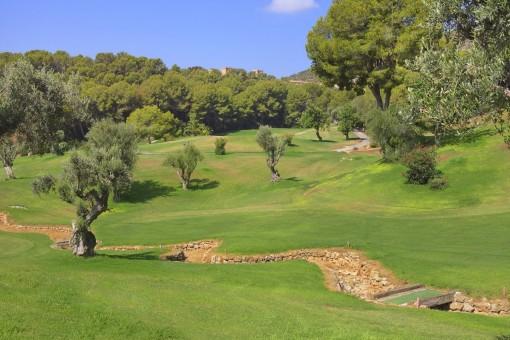 Der Golfplatz von Bendinat ist sehr nahe