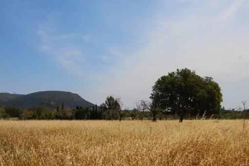 Großes 21.800 qm Grundstück