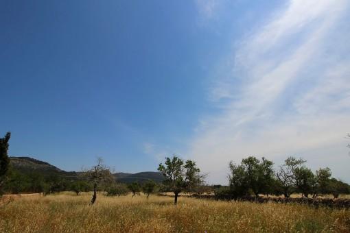 Blick auf den Puig de Randa
