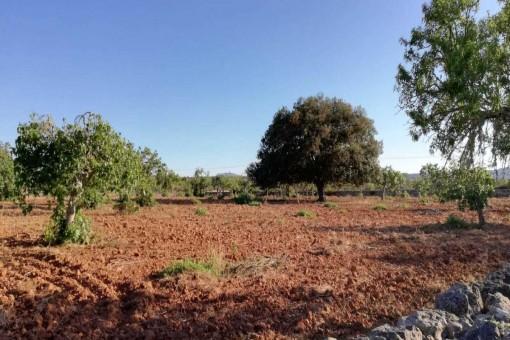 Schönes Grundstück nahe Llubi/Sineu mit ca. 18.000 qm und Bebauungsmöglichkeit für einen sehr fairen Preis