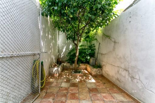 Kleiner Patio mit Zitronenbaum