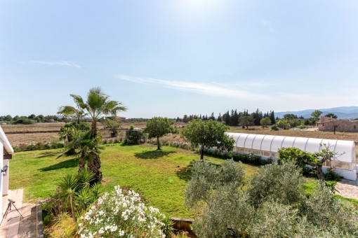 Mediterraner Garten mit Palmen