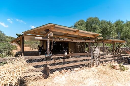 Stall für Pferde oder Esel