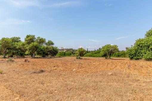 Grundstück mit Basisprojekt zwischen Sant Llorenç und Son Servera