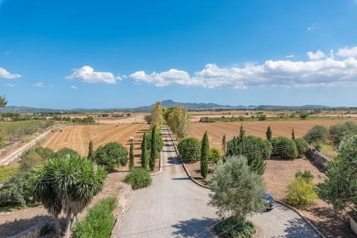 Bepflanzte Zufahrt zur Finca