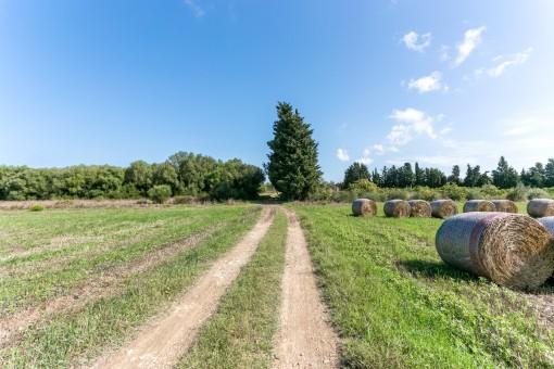 Auffahrt des Grundstücks