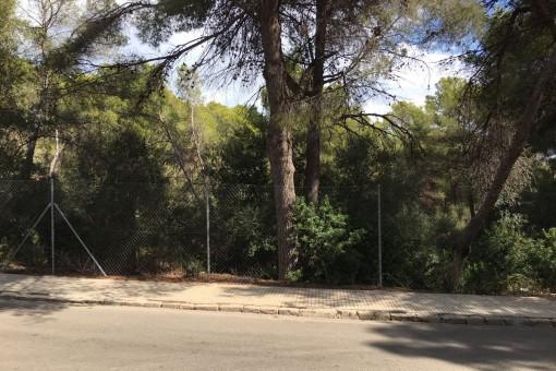Großes, nach Nordwesten ausgerichtetes Grundstück mit viel Potenzial in Cala Vinyas