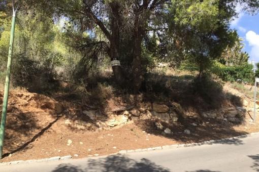 Großes, nordwestlich ausgerichtetes Grundstück zum Bau eines Hauses in Cala Vinyas