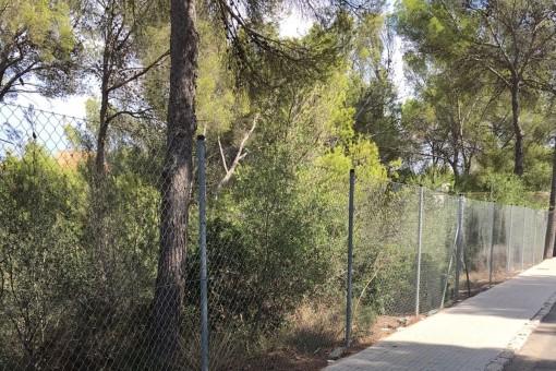 Großes nach Süden ausgerichtetes Grundstück zum Bau eines Familienhauses in Cala Vinyas