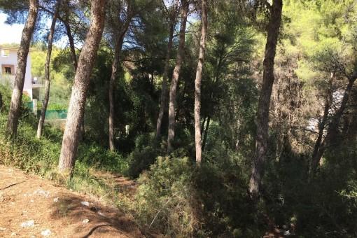 Großes Grundstück in der ruhigen Gegend von Cala Vinya
