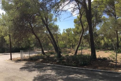 Großes, nach Südwesten ausgerichtetes Grundstück zum Bau eines Familienhauses in Cala Vinyas