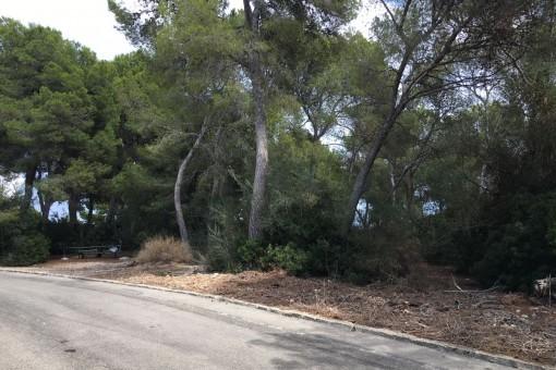 Großes nach Nordwesten ausgerichtetes Grundstück zum Bau eines Familienhauses in Cala Vinyas
