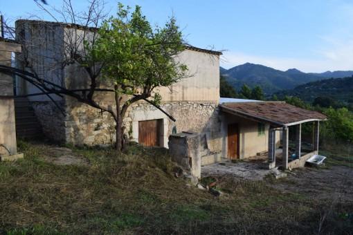 Grundstück mit mediterraner Finca mit Obstbäumen und kleinem Pinienwald in Mancor de la Vall