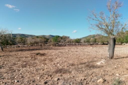 Großes Baugrundstück mit Basisprojekt in der Nähe von San Lorenzo