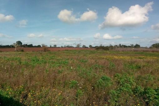 Großes Grundstück mit Basisprojekt nahe San Lorenzo