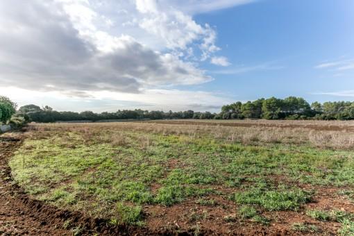 700.000 qm großes Grundstück in Sencelles<br /> mit renovierungsbedürftigen Gebäuden sowie Anbau- und Waldflächen