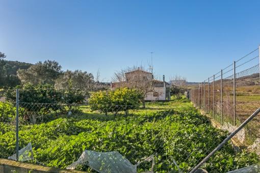Fantastischer Gartenbereich mit Orangenbäumen