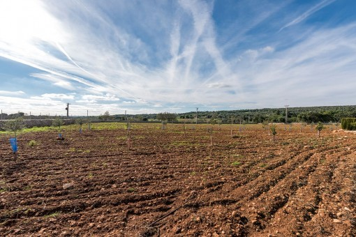 Großes Feld für den Anbau