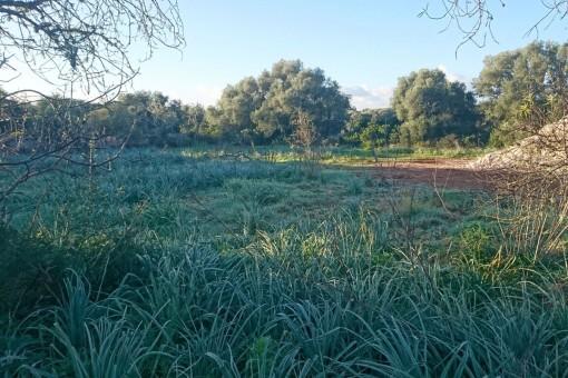 Traumgrundstück in Santanyi mit begonnenem Bauprojekt